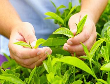 det-man-tea-leaves.jpg